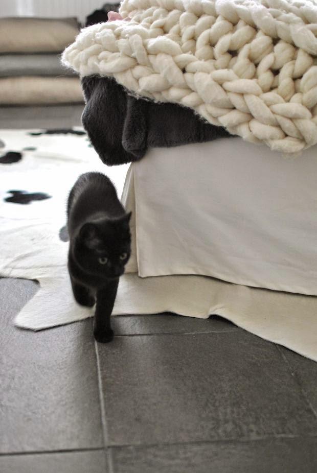 2 svart kattunge
